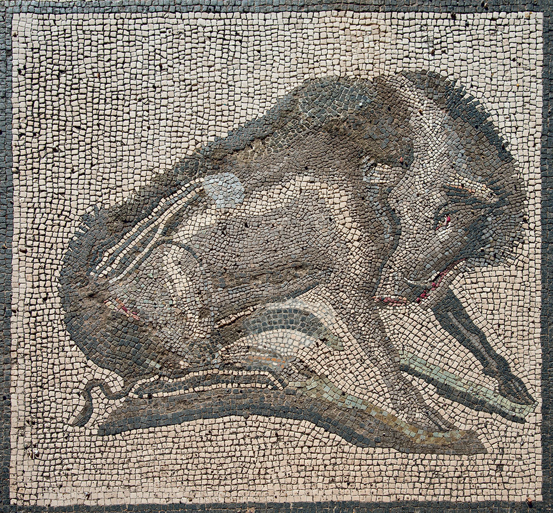 Wild boar. Floor mosaic of the entrance to the House of Vesbinus (Casa del Cinghiale II). Pompeii, VIII.2.27. 50—79 CE. Pompeii