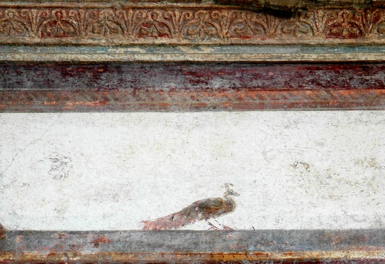 Peacock. Fresco from the House of the Trojan Sacellum. Second style. Ca. 80—20 BCE. Pompeii, The House of the Trojan Sacellum, I, 6, 4