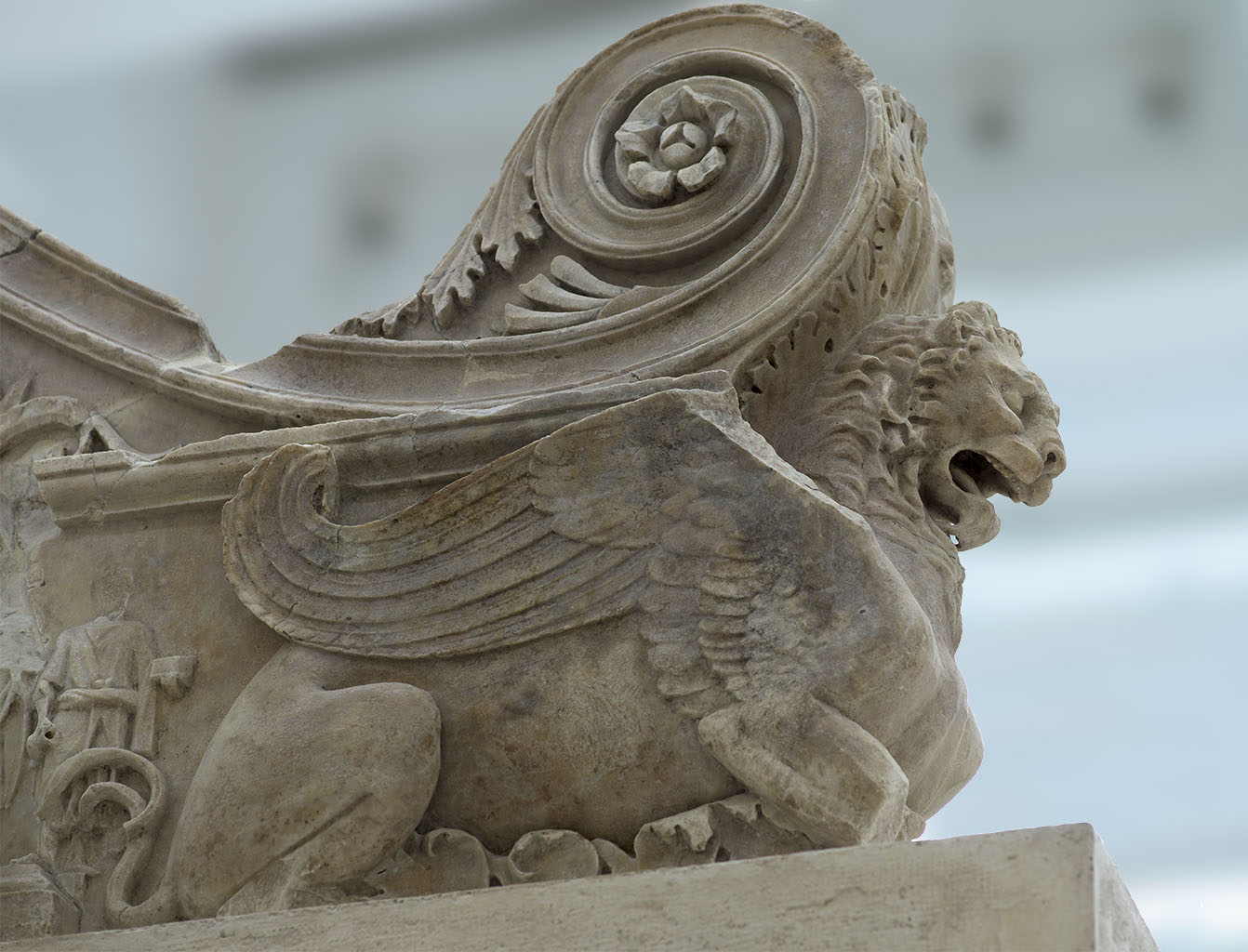 Griffon.  North crowning slab of the sacrificial table, internal side. Rome, Museum of the Altar of Augustan Peace (Ara Pacis Augustae)