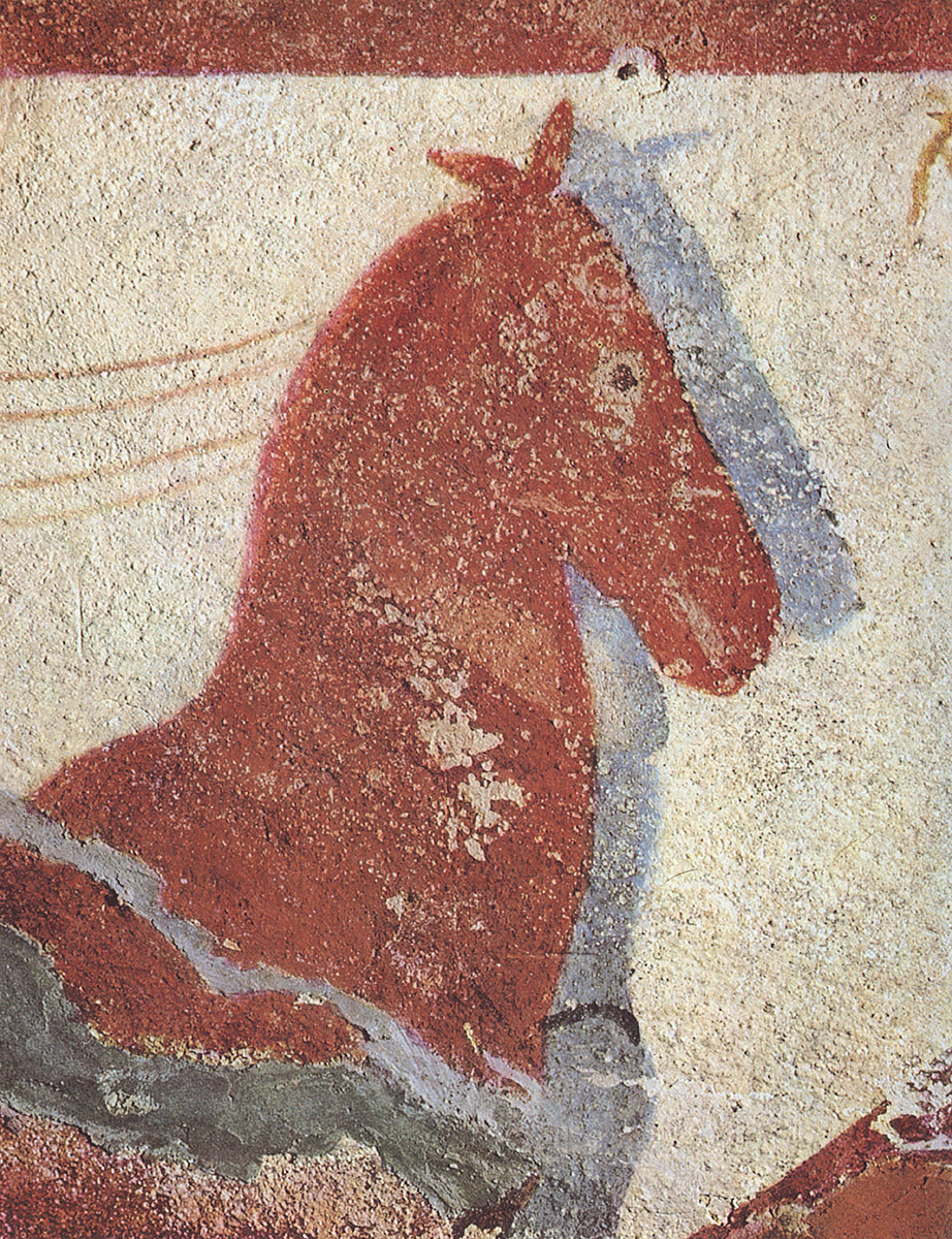 Head of horse. 5th century BCE. Tarquinia, Tomb of Francesca Giustiniani